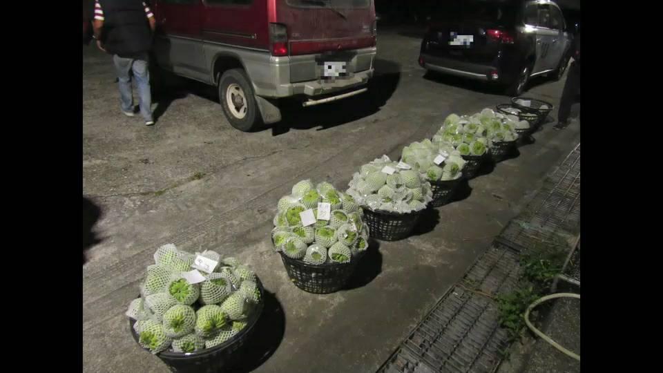 警方在陳嫌銷贓處所,當場起出釋迦贓物502斤。圖/成功警分局提供