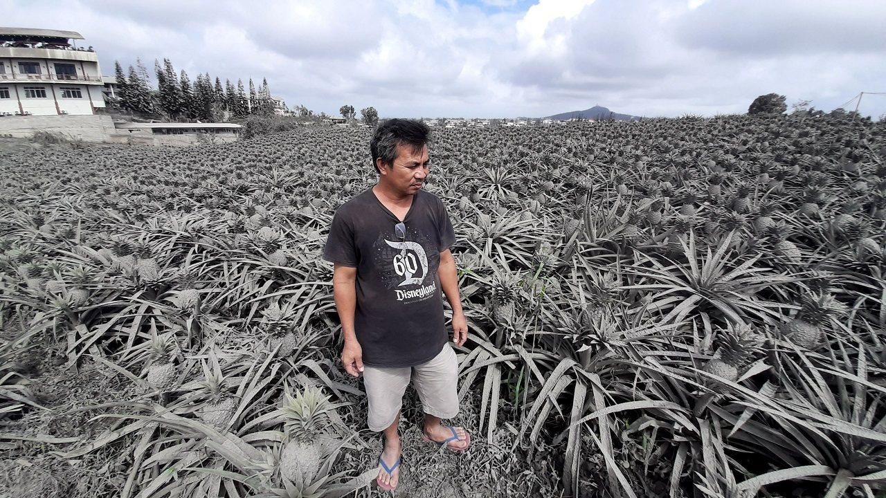 菲律賓首都馬尼拉南方的塔爾火山從12日開始噴發,鳳梨農英佩里歐15日站在被火山灰...