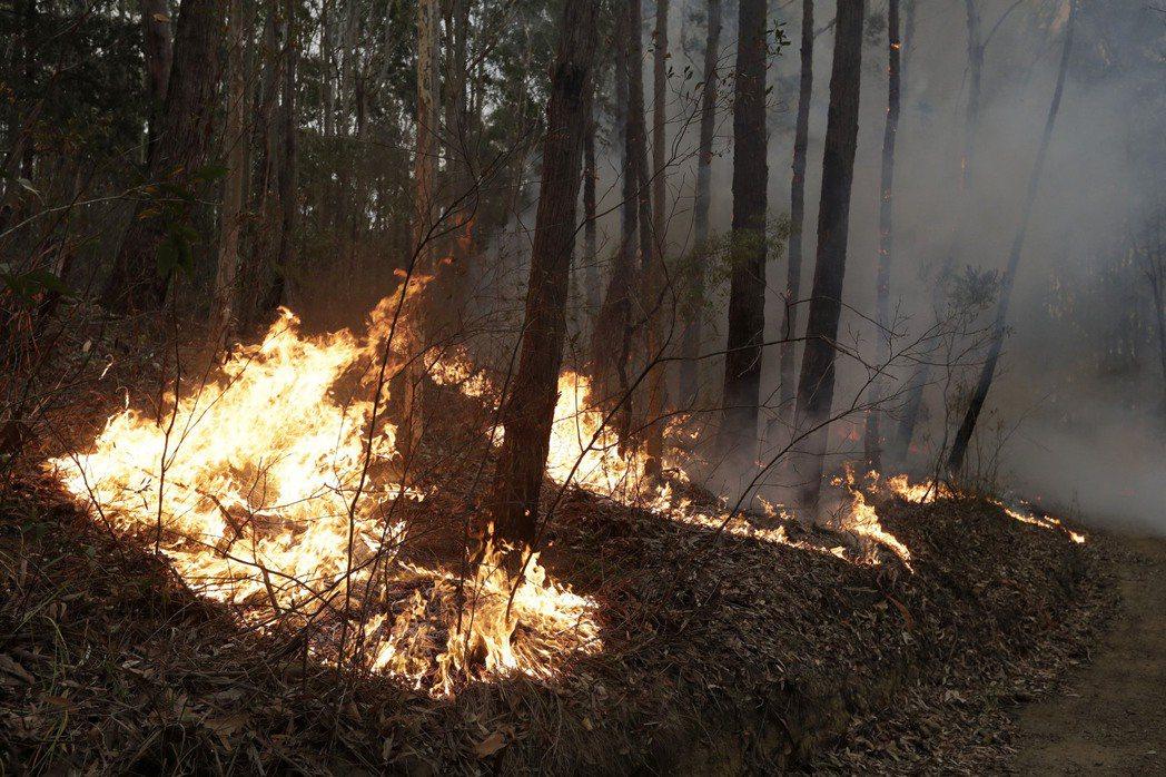 澳洲蔓延的野火災難,不僅是當地自然生態的浩劫,在災情慘重混亂、民眾對於政府處置幾...