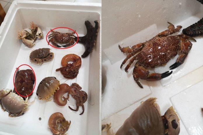 網友指出到魚市買海產卻買到有劇毒的螃蟹類。圖/翻攝爆廢公社