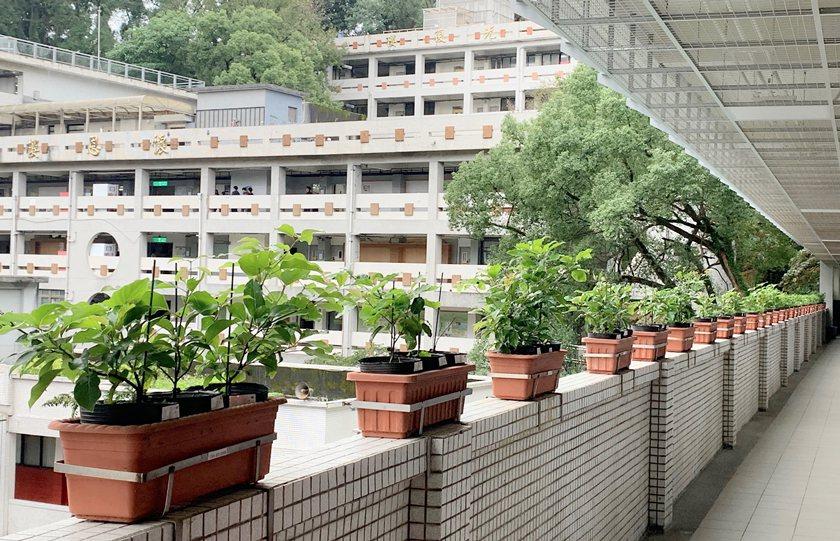 中國科大台北校區自強樓為全台首棟類綠建築。 校方/提供