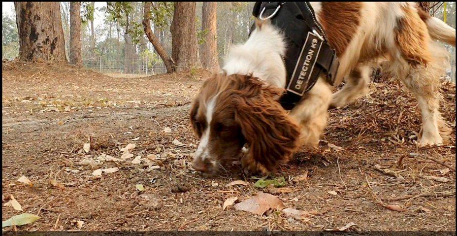 搜索犬Taylor與訓練員塔廷是好搭擋。路透