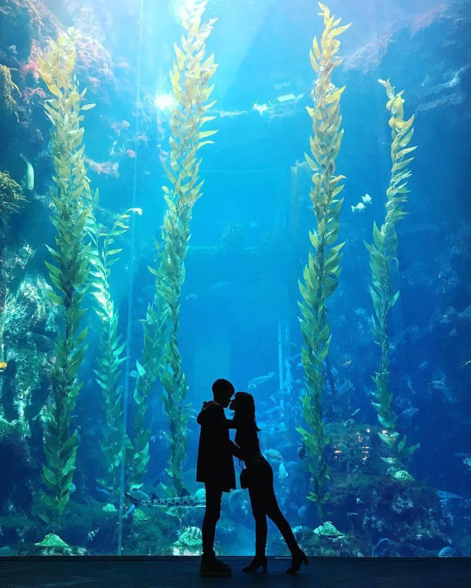 屏東海生館去年底引進高度近10公尺的巨藻,本月初完成檢疫手續入缸展示,無需濾鏡就能拍出剪影效果,呈現恍如夢境般感覺,成為新竄起的美拍和打卡熱點。記者潘欣中/翻攝