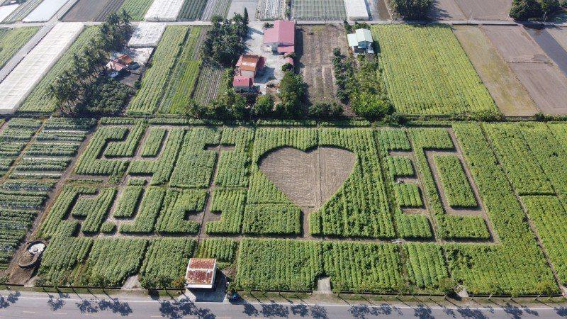 高雄杉林區有全台最大的葵花圖騰。圖/杉林區公所提供