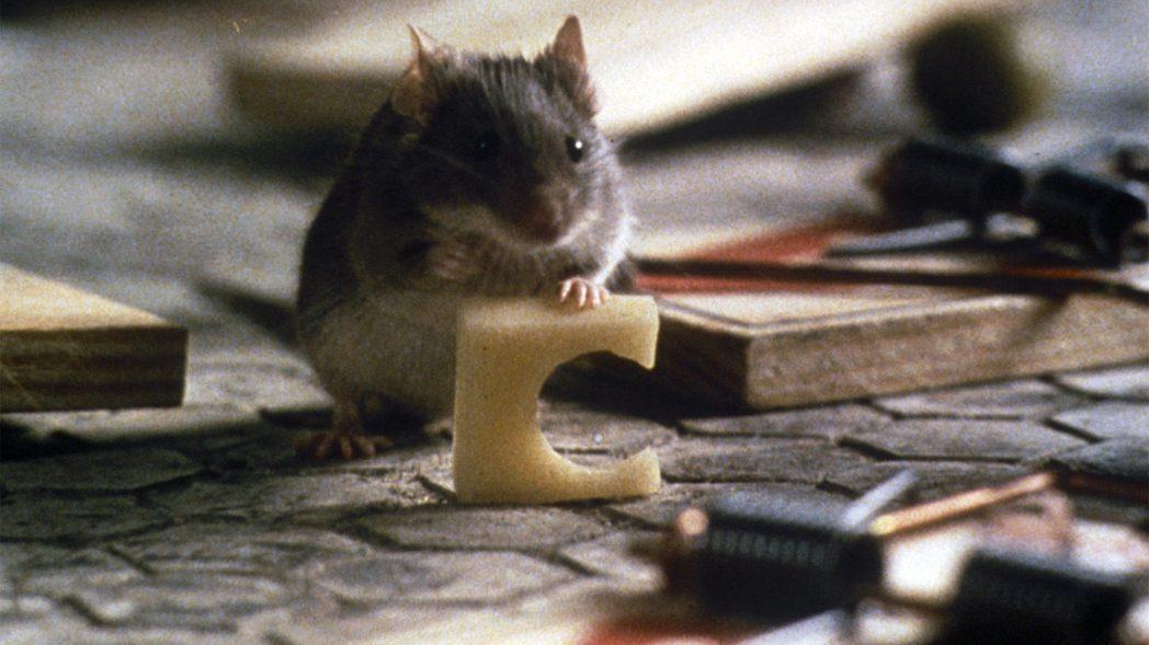 「捕鼠氣」非常受到台灣觀眾喜愛。圖/摘自imdb