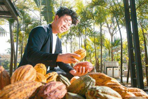 許華仁用巧克力說台灣的故事,圖為五顏六色的可可果。 攝影/陳立凱