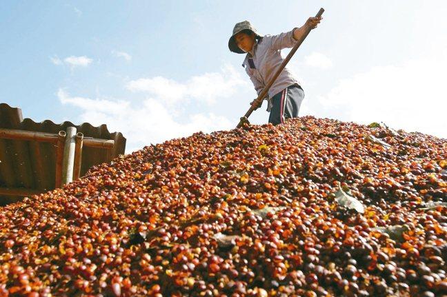 咖啡出口大國越南準備迎戰雀巢及其他業者,規劃推出自家產品,運用地理優勢以及低廉成...