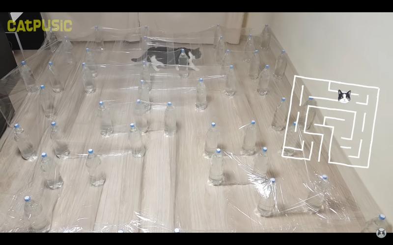 網友為自家寵物貓設計迷宮。圖/YouTube