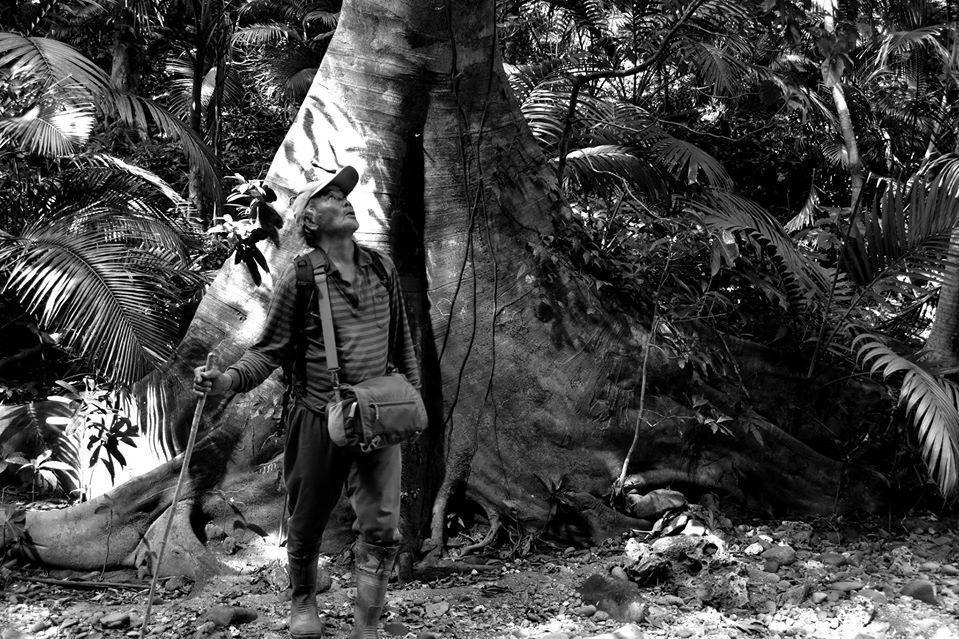 身手矯捷的「阿泉伯」呂順泉,徒手攀爬近90度垂直的陡峭裸岩,為雅美萬代蘭帶回續命的希望:一枚果莢。 圖/取自鐘詩文Facebook