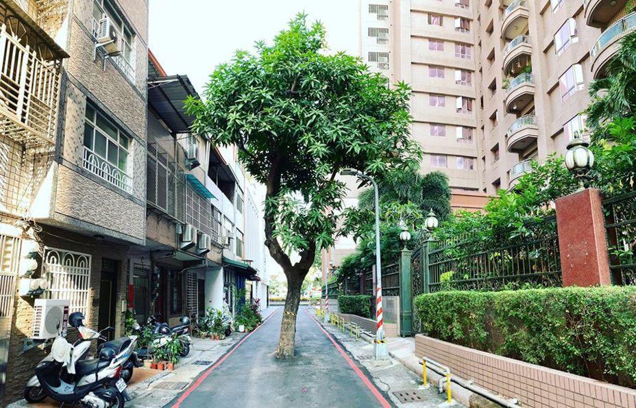 長在路正中央的大樹讓網友直呼是奇景。圖擷自facebook