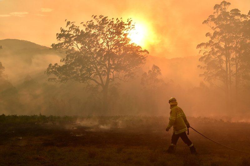澳洲大火自去年9月開始延燒,造成無數動物死傷。 圖/法新社