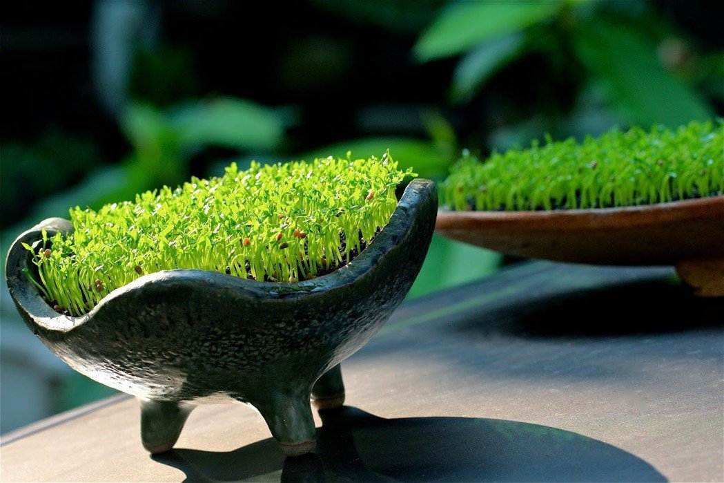 綠色植物的生命力,象徵新的一年充滿無限希望與朝氣 業者/提供