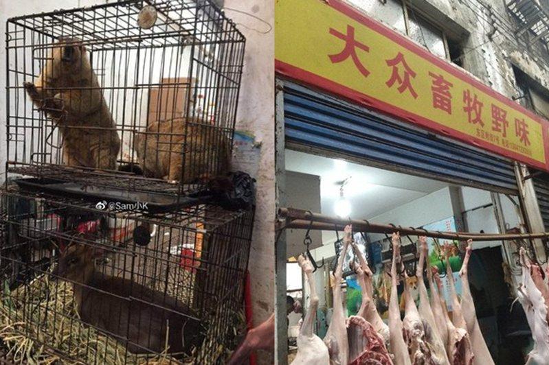 這次疫情蔓延是和野生動物販運監督不周有關。圖翻攝自微博