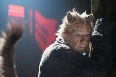 史詩級災難片《貓》(二):老貓與老明星的尊嚴