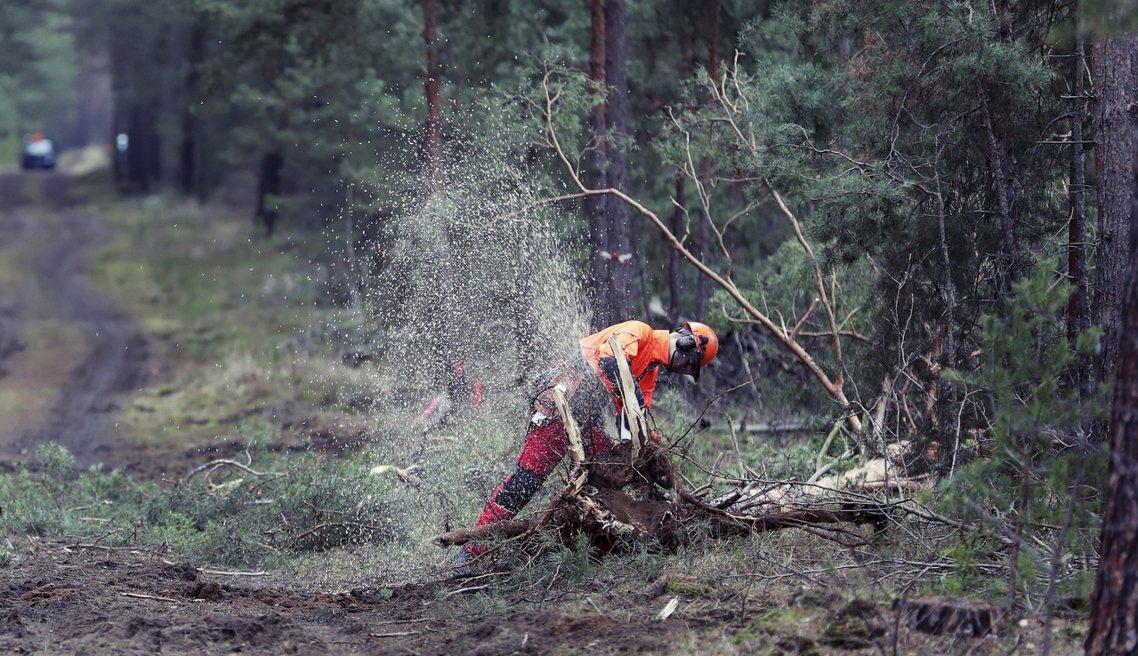 儘管特斯拉收購的土地屬於工業用區,但土地上目前仍是一片松林,工廠用地更是緊臨著勒...