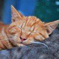 最棒的養生美容方式是「睡覺」!3方式顧好睡眠變更美