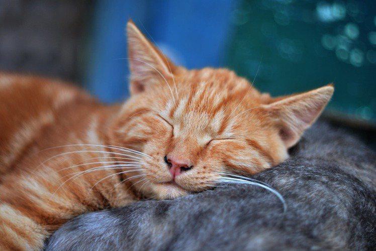 規律的睡眠時間,才能培養出健康的身體。圖/摘自 pexels