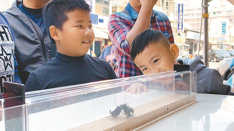 台南市新化年貨大街有獨特的「鬥蟋蟀」擂台 ,吸引小朋友圍觀。 記者吳淑玲/攝影