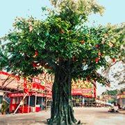 到林村許願樹拋寶牒。圖/摘自香港旅遊發展局網站