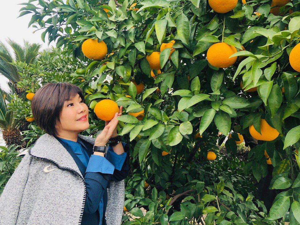 唐美雲赴日本愛媛縣參加「愛媛國際電影節」,特別喜歡當地特產愛媛橘子。圖/民視提供