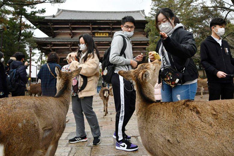 圖為日本賞鹿遊客因應新型冠狀病毒而戴上口罩。 圖/美聯社