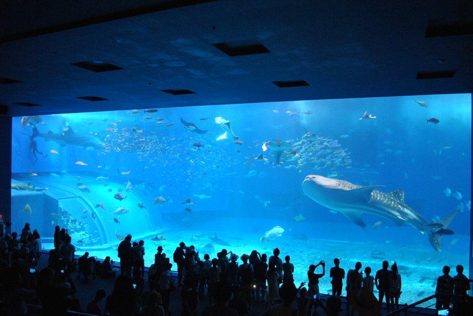 沖繩美麗海水族館的「黑潮之海」,飼養鯨鯊等多種魚類。本報資料照片
