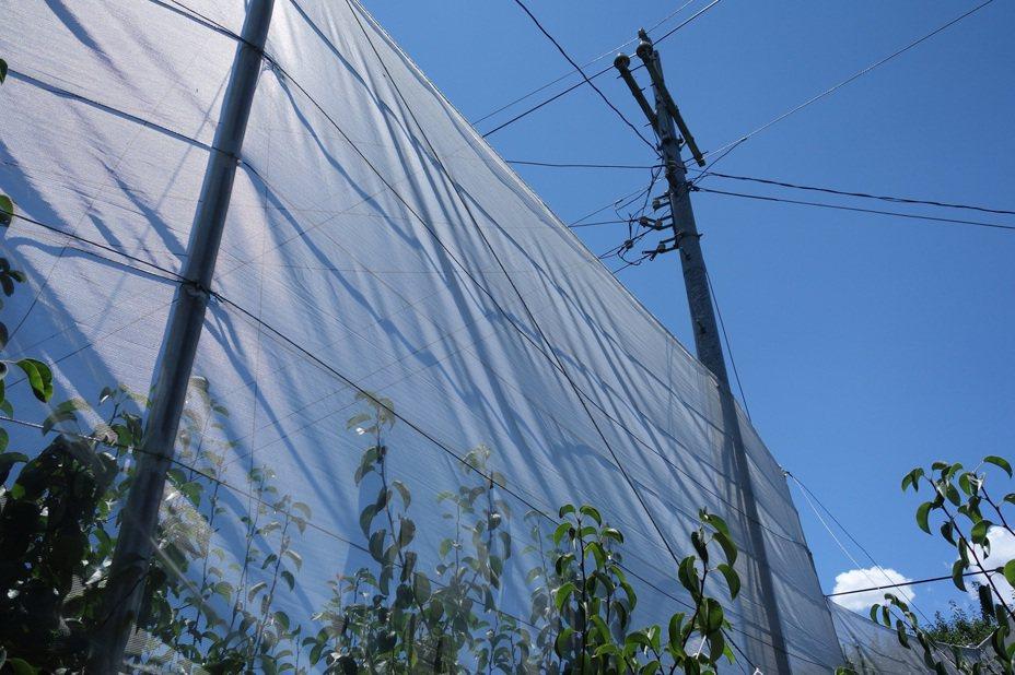 果園防風網。圖/農委會提供