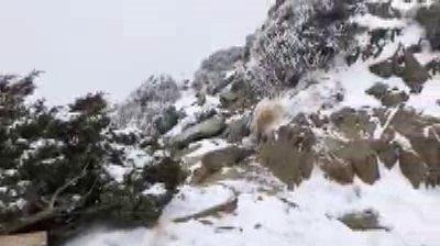 雪山今天的溫度下探攝氏零下14度,雪山圈谷積雪約13公分,高山一片雪景。圖/雪霸國家公園保育志工吳峻德提供