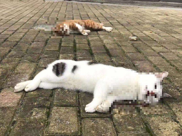 微博上不少人貼出許多地方所見貓狗被摔死的照片。 圖/翻攝自微博