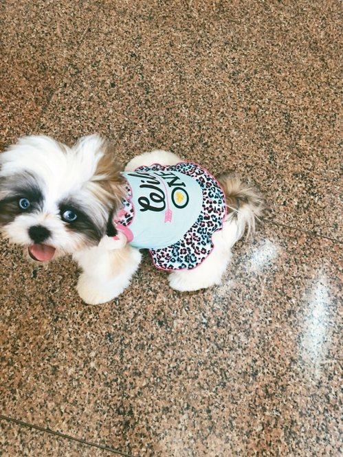 陳亞蘭愛犬毛毛。 圖/麗生百合提供