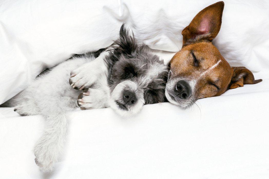 夫妻一定要睡同一張床嗎?專家認為,分床睡是獲得一夜好眠、改善健康並增進幸福關係的...