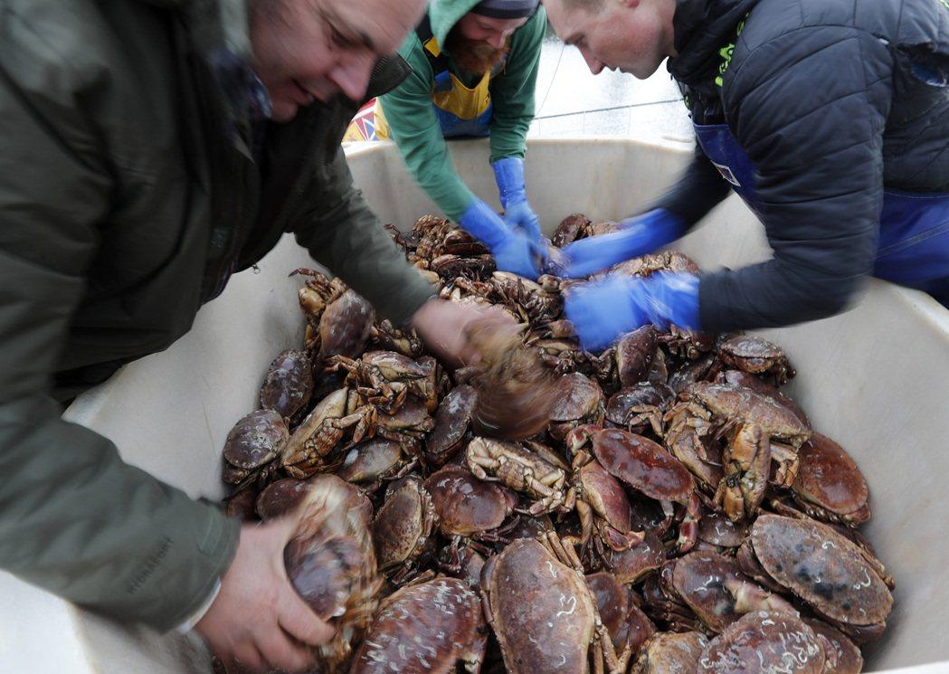 英國漁民結束螃蟹捕撈後,返回港口進行後續工作。(美聯社)