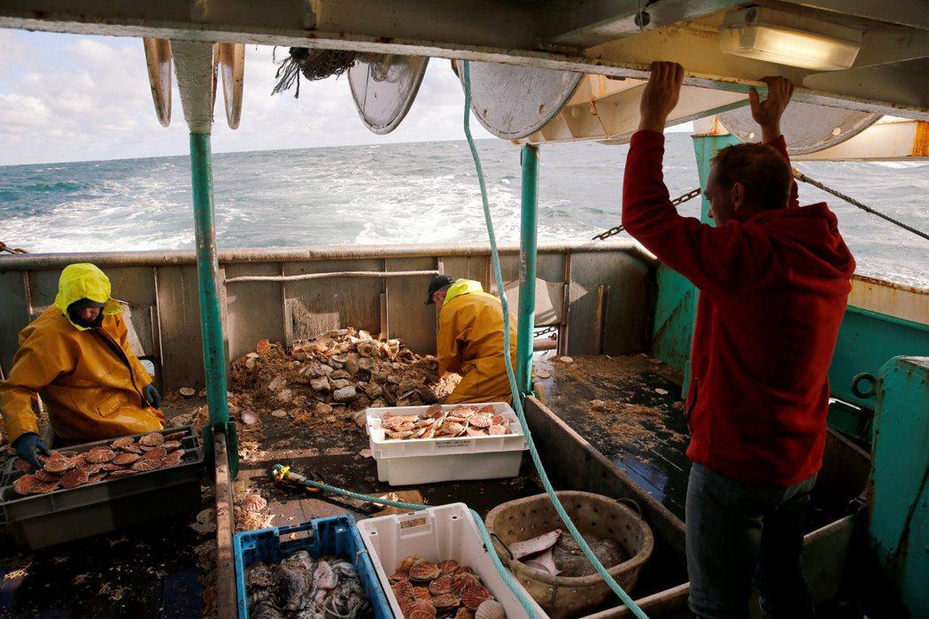 漁民在法國扇貝捕撈季期間於漁船甲板處理扇貝。(路透)
