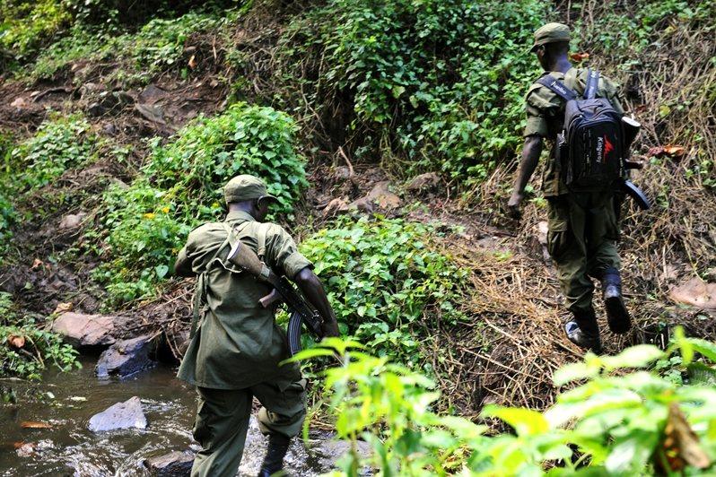 烏干達野生動物管理局(UWA)與國家林業局緊密合作,一同處置國家保護區內的非法砍伐、非法定居者等問題。 圖/法新社