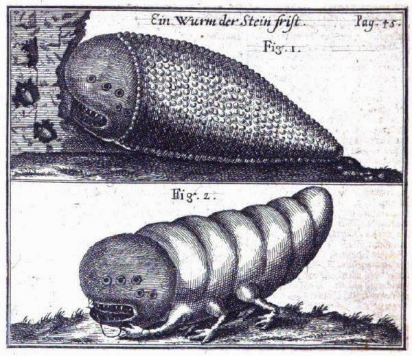 Shamir蟲