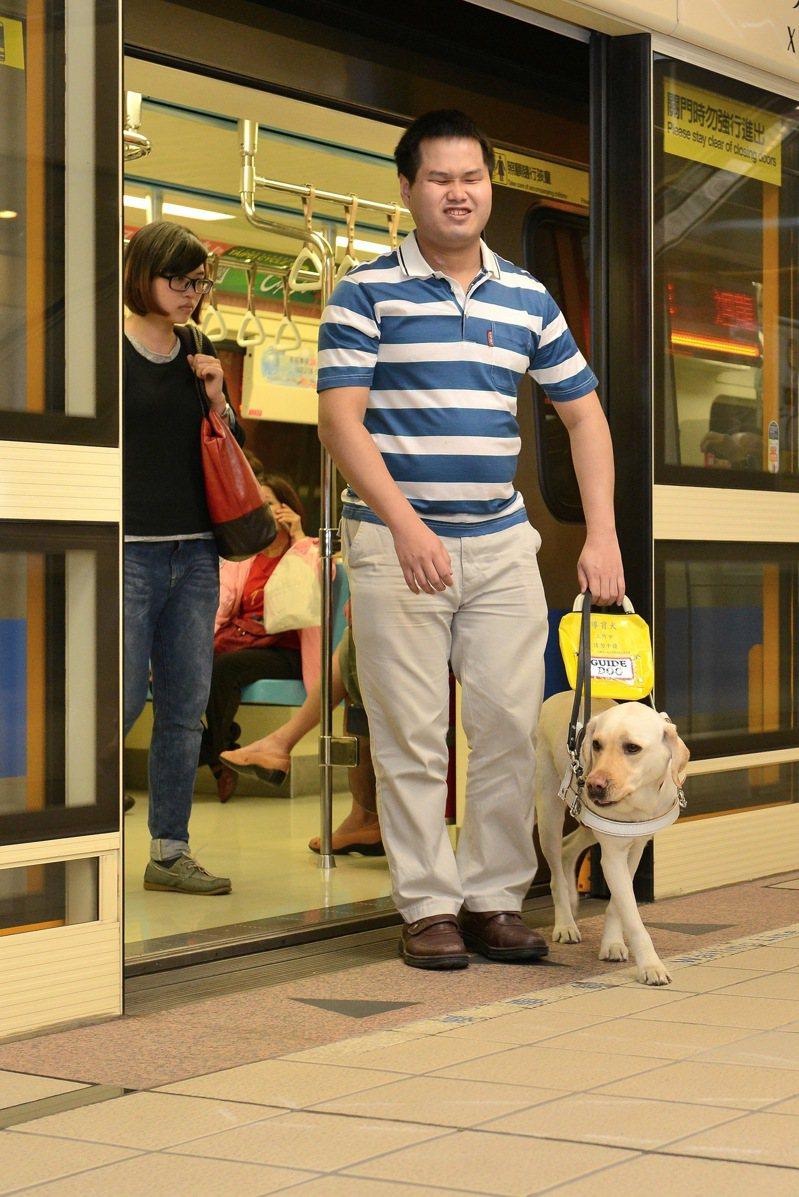 最常作為導盲犬的犬種為拉布拉多,每5隻培訓的拉不拉多,只有2隻能成功訓練成導盲犬,成功率僅百分之40,培訓非常不易。圖/惠光導盲犬學校提供