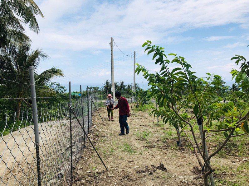 為防猴害,台東縣政府今年再持續補助農民架設電圍網,即日起自3月25日止,最高補助金額4萬5千元,預計45戶受惠。圖/台東縣政府提供