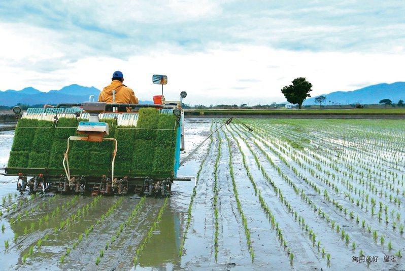 紓緩農業人力缺口,首批農業移工已上線。本報資料照片