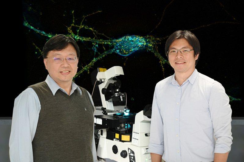 清華分醫所副教授林玉俊(右)與醫環系教授葉秩光發展超音波治療取得重大突破。 圖/清大提供