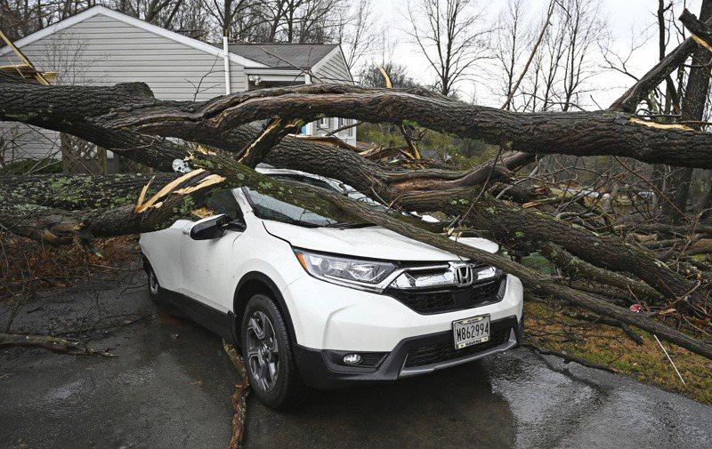 美東與西北風暴成災,路樹倒在轎車上。圖/世界日報提供