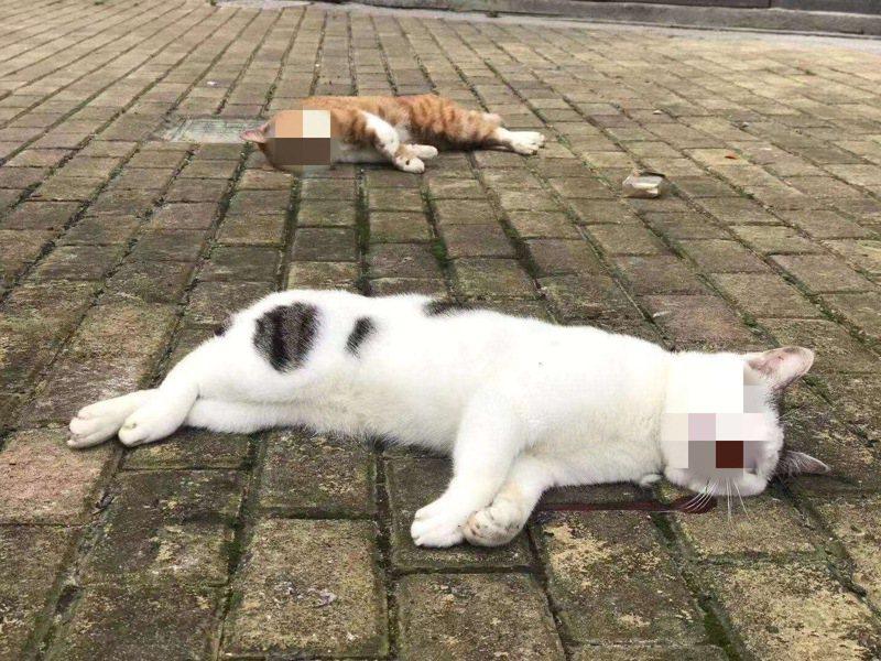飼主因聽信謠言,狠心將貓咪摔出窗外。圖/Weibo