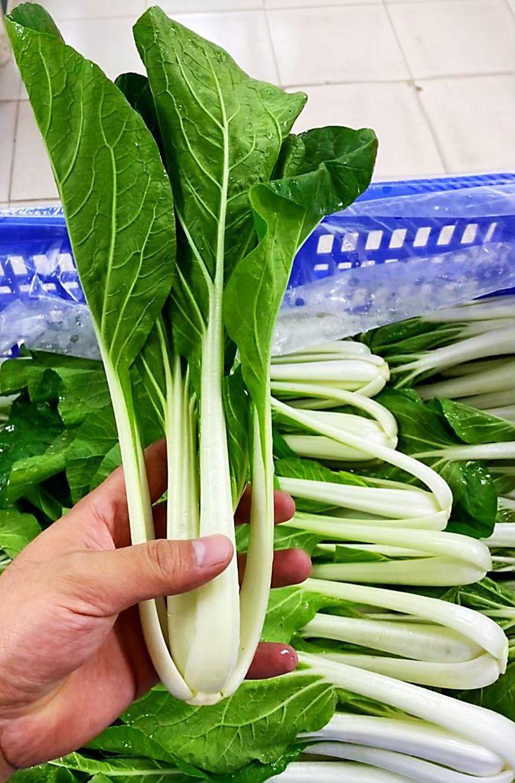 新冠肺炎疫情導致延後開學,蔬菜將採收卻無法出貨,新北果菜啟動團購促銷。圖/新北果菜公司提供