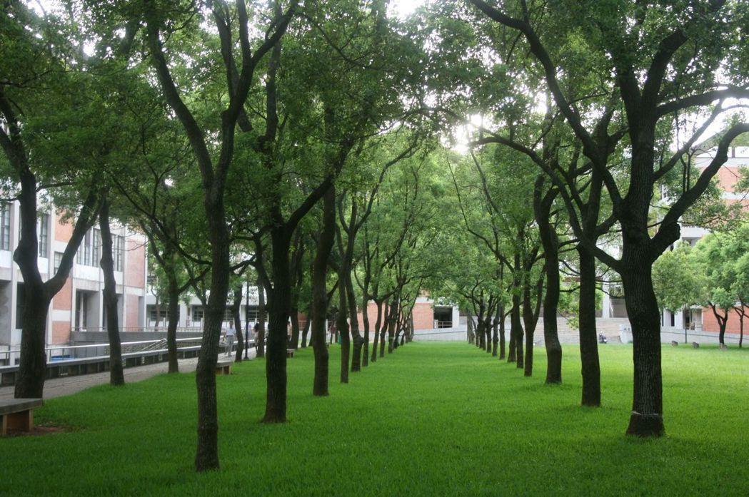 良好管理可讓樹木健康成長。 圖/林試所中埔研究中心提供