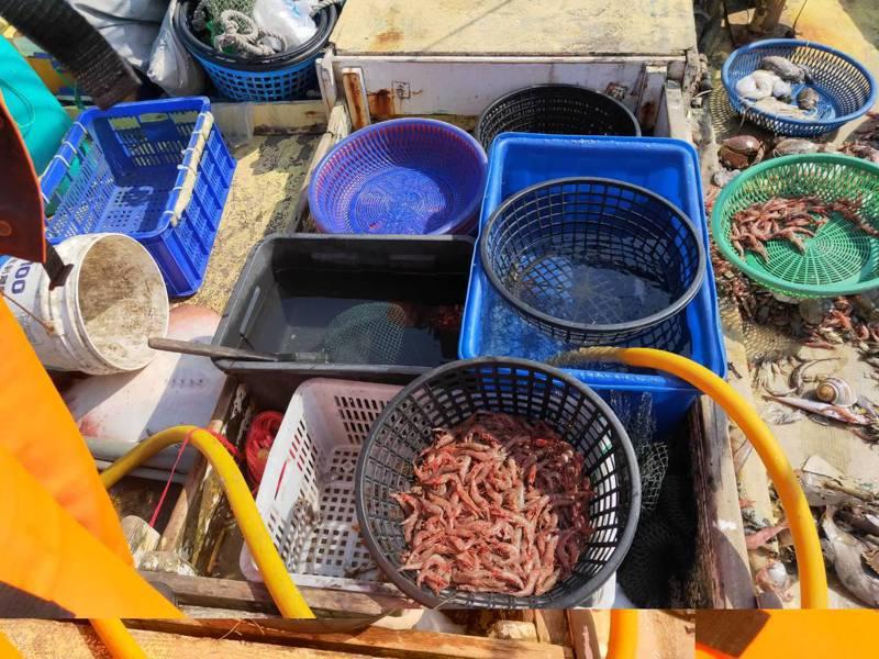 海巡人員在安平外海查獲漁船涉嫌電魚,查扣近50公斤蝦蟹。記者黃宣翰/翻攝