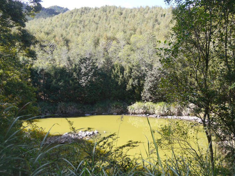 南橫天池是一處高山湖泊,因水質優養化嚴重,池水呈現深綠色。圖/本報資料照