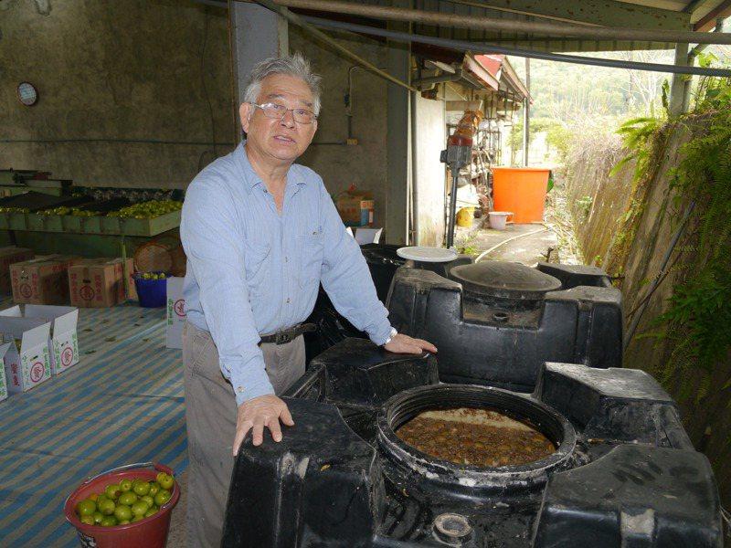朱坤賢將NG棗子拿來製作酵素當肥料。記者徐白櫻/攝影