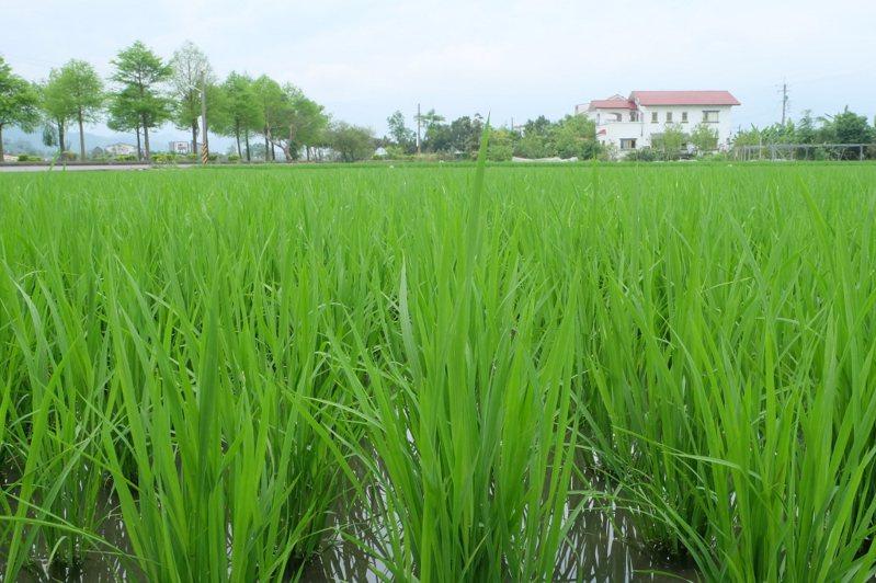 南台灣接連發生有機農場慘遭逼退的另類「疫情」;為了發展綠能和工業,百大青農經營的有機畜牧場要被強徵土地。 圖/聯合報系資料照片