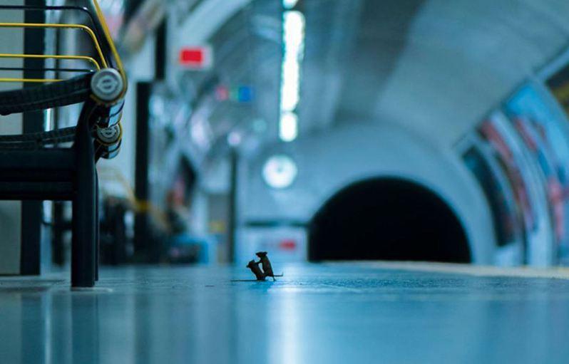 英國攝影師羅利(Sam Rowley)捕捉到兩鼠搏鬥的瞬間,逗趣照片贏得年度野生動物攝影師大賽民眾票選獎。圖取自/<a href=