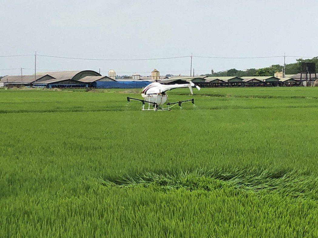 無人機農噴應用於後壁區稻田。 臺南市政府/提供