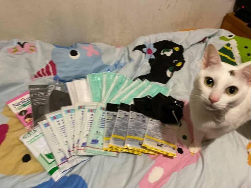 家中貓貓突然翻出一堆口罩。 圖/取自香港01